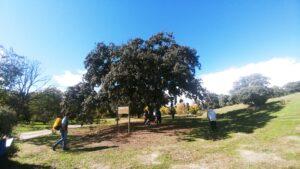 Observando árboles singulares