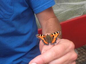 Aprende a identificar las mariposas de Madrid