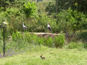 Papel de las áreas verdes urbanas en el fomento de la biodiversidad (NOVEDAD)