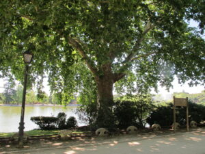 Árboles singulares en torno al Lago