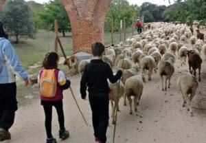 Pastores por un día
