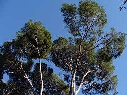Árboles y arbustos autóctonos de la región mediterránea