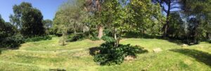 Usos y utilidades de los árboles del Retiro @ CIEA El Huerto del Retiro