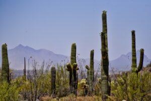 ANULADA: Conferencia: Viaje a Arizona y California, el Desierto en todo su esplendor