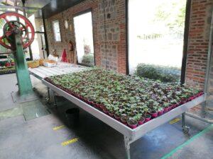 ANULADA: Historia de una semilla @ CIEA El Huerto del Retiro