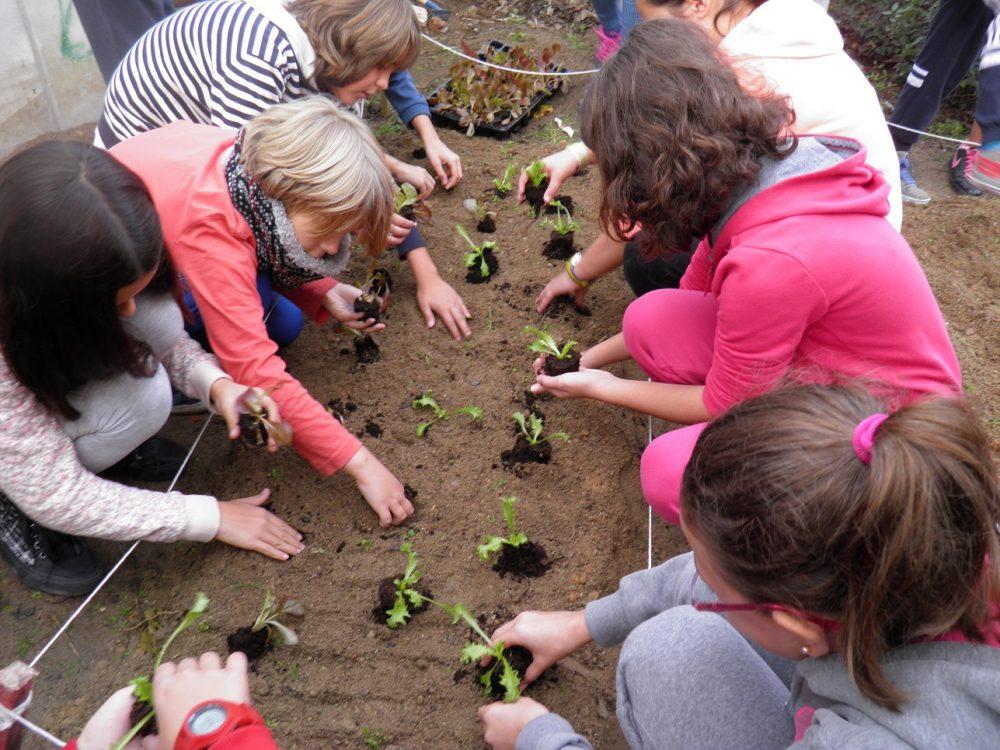 El huerto se convierte en aula para aprender haciendo