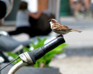 BICIAVES: Itinerarios ornitológicos en bici