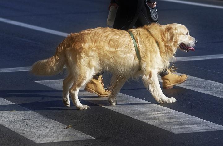 Campaña de heces caninas