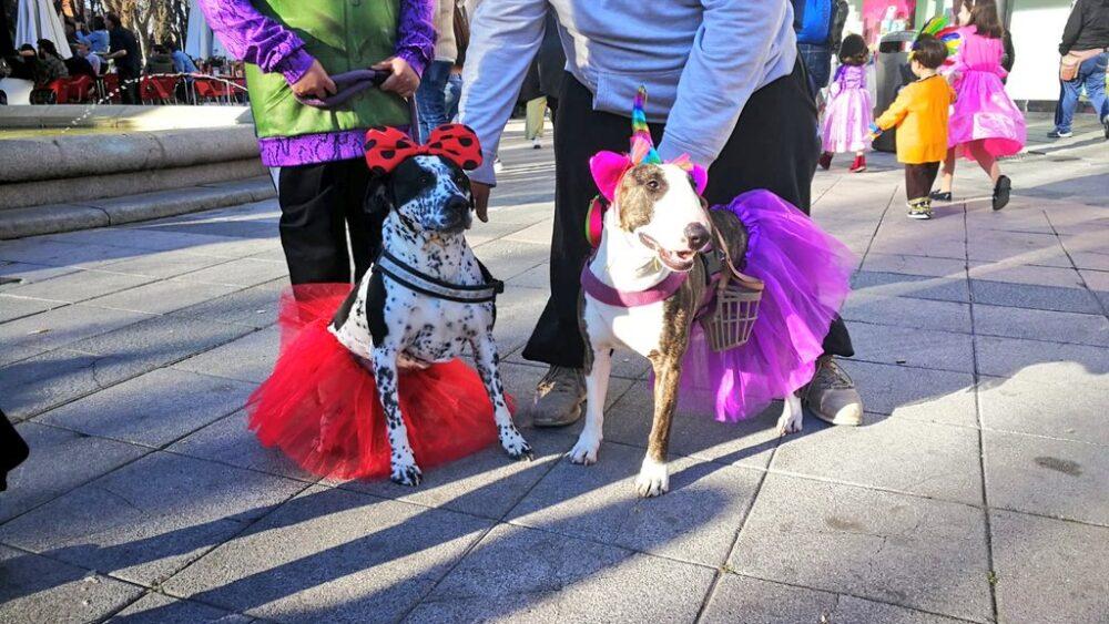 Hasta los perros celebran Carnaval