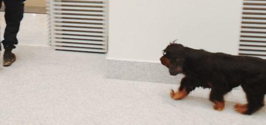 perro-policia-para-post-blog