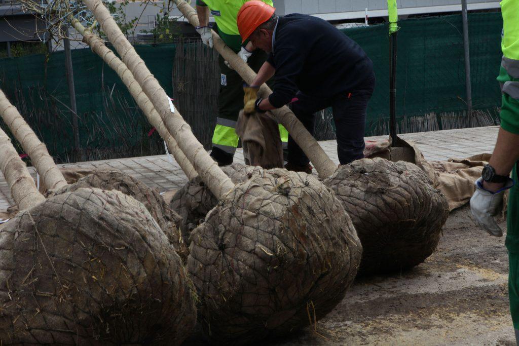 Preparación para la plantación de árboles