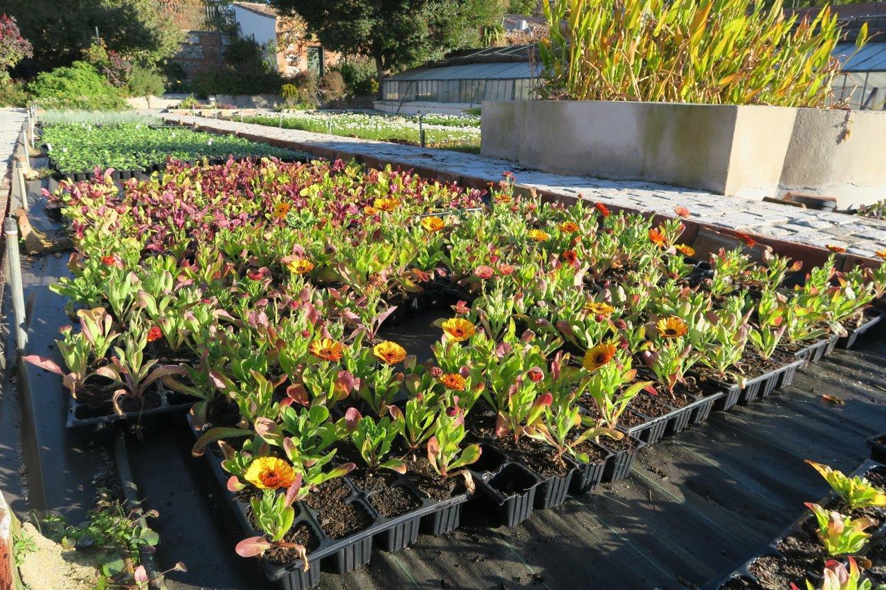 El huerto del retiro reparte verduras y hortalizas de for Plantas beneficiosas para el huerto