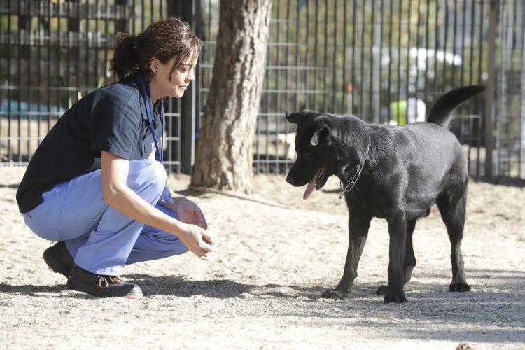 Imagen de archivo de una trabajadora del CPA con un perro de los que albergan