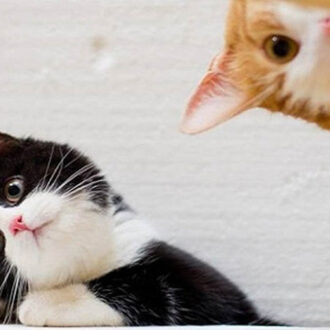 Mascotas, gatos