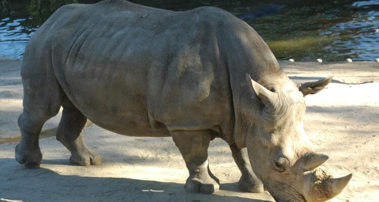 Otra opción en familia, el Zoo