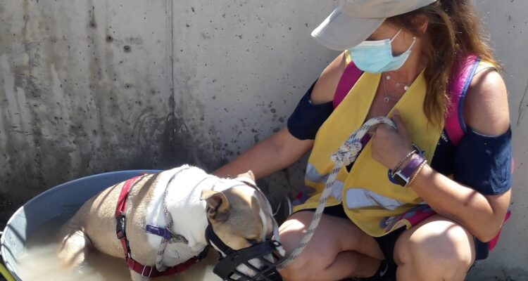 Voluntariado con el Centro de Protección de Animales