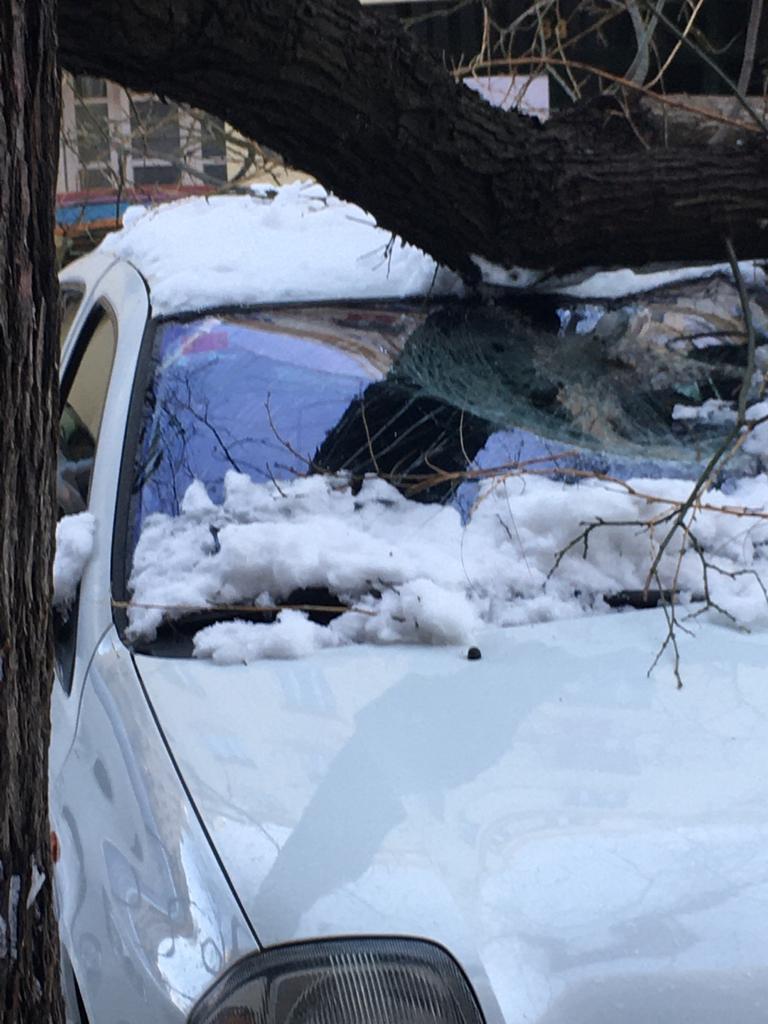 La acumulación de nieve en los árboles, un gran riesgo para peatones y vehículos